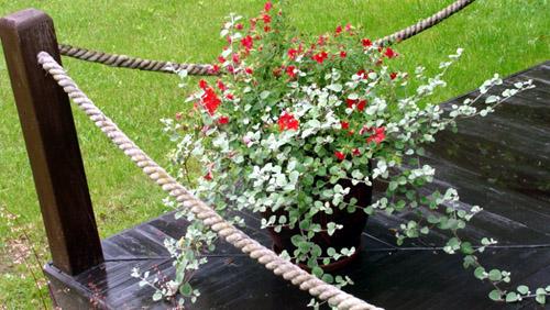 садовые цветники и клумбы