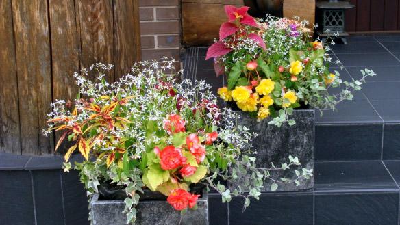 планировка клумб и цветников